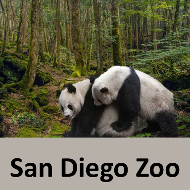 San Diego Zoo, Best Zoos in the world, Largest Zoos in the world in 2019 are San Diego Zoo,,London Zoo,,Beijing Zoo,Henry Doorly Zoo,The Bronx Zoo,Moscow Zoo